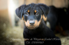 bb beaucerons disponible
